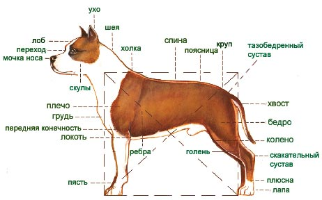http://zoloto-sta.narod.ru/st_body_2.jpg
